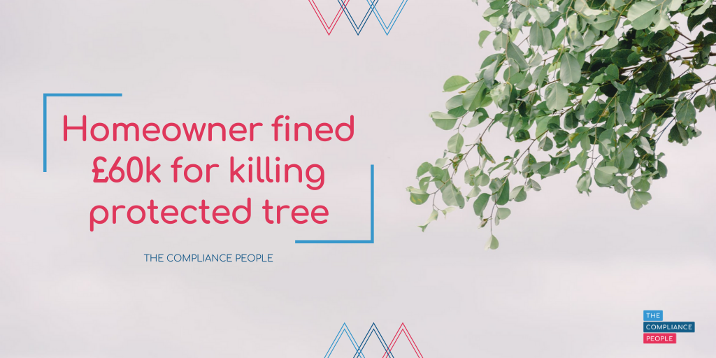 Homeowner fined £60k for killing protected tree 1